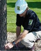 Certified Arborist Performing and Inspection