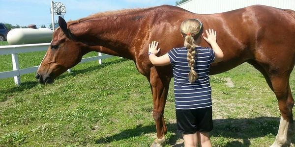 equine assisted, horses help, horse therapy, horse counseling, equine assisted counseling, eagala