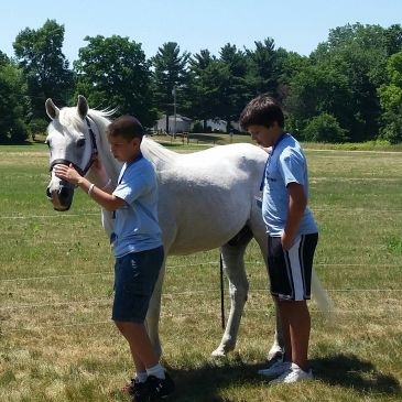 group therapy, group counseling, affordable mental health, mental health, horses, equine assisted