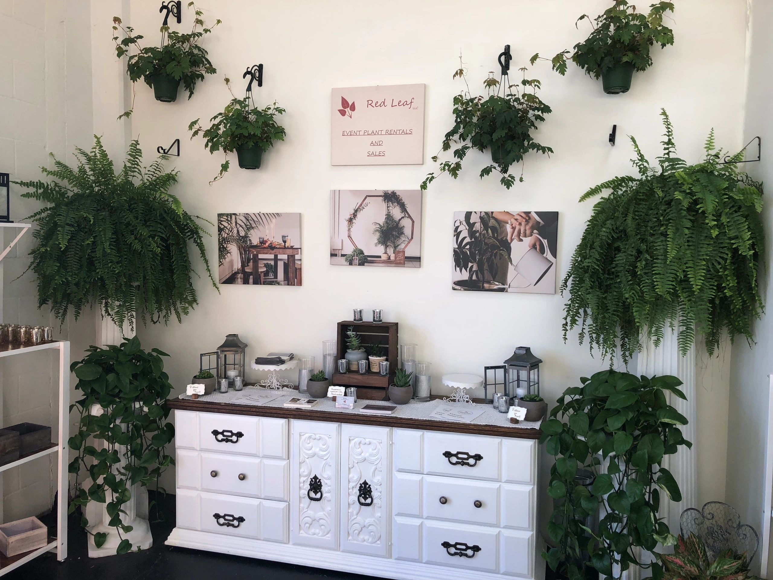 Plant rental display