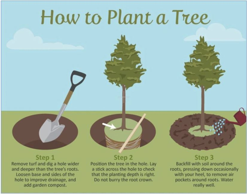 How to Plant a Tree | WhiteWillow Nursery Supply