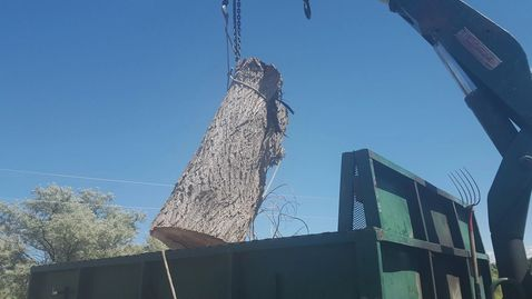 Loading up a Seedless Cottonwood log in Billings, MT today.