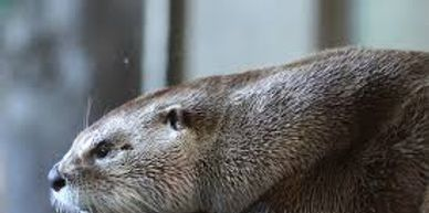 Otters are scared away by Spark-Away Animal Deterrent - save your docks, boats and property.