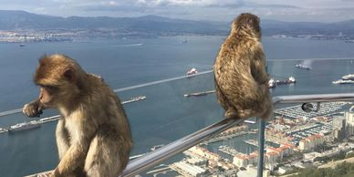 Monkeys on the skywalk barbary macacques rock tour gibraltar sightseeing shore excursions