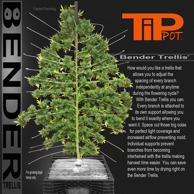 Bender Trellis the most flexible trellis let you adjust branch spacing anytime during growing