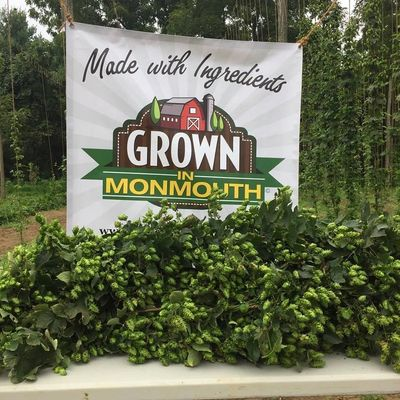New Jersey Hops, NJ Hops, NJHOPS, Monmouth County, Colts Neck, Craft Beer, FirFarm Hops, Wet Hops