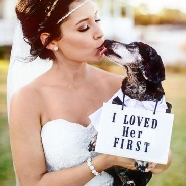 Wedding Day with your furry friends