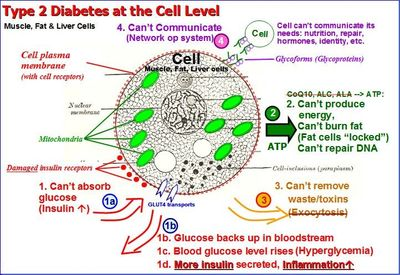 Diagram: Type 2 Diabetes at the Cell Level