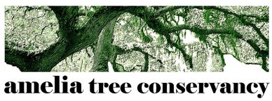 Amelia Tree Conservancy is dedicated to preserving our maritime forest canopy on Amelia Island.