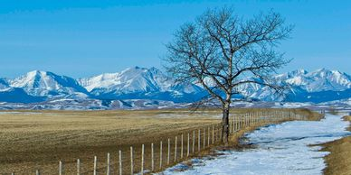 Landscape The Foothills with fence and tree in Longview Alberta.