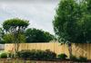 Privacy wood fence in College Station