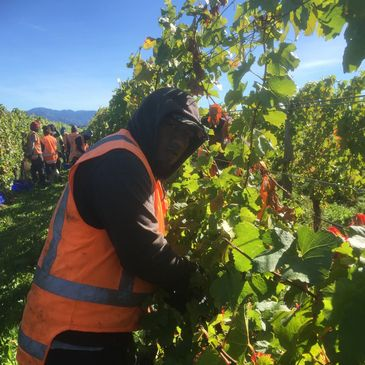 Vinepower New Zealand recognised seasonal employer program