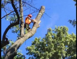 Tree service, Tree removal, pruning, tree cutting, thinning, reduction,