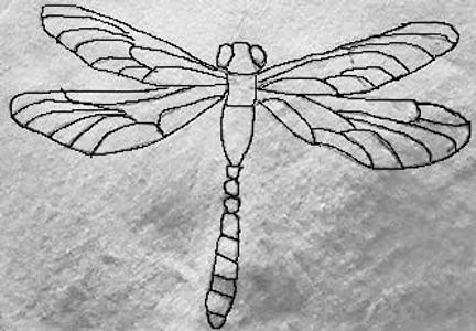 dragonfly image ready for embroidery