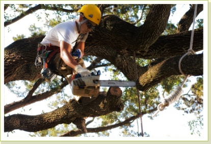 Dekalb Tree Service Experts - Tree Pruning