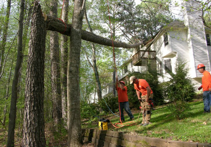 Dekalb Tree Service Experts - Emergency Tree Removal