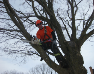 Dekalb Tree Service Experts - Tree Trimming