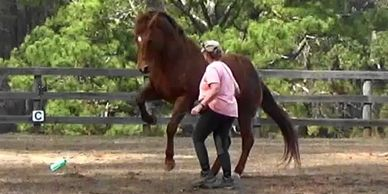 Powerful movement releases chemicals that allow the horse's posture to change organically.  For their own strength, coordination and balance.