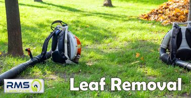 Leaf Removal services are offered all year round