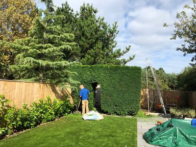 Hedge cutting in a back garden