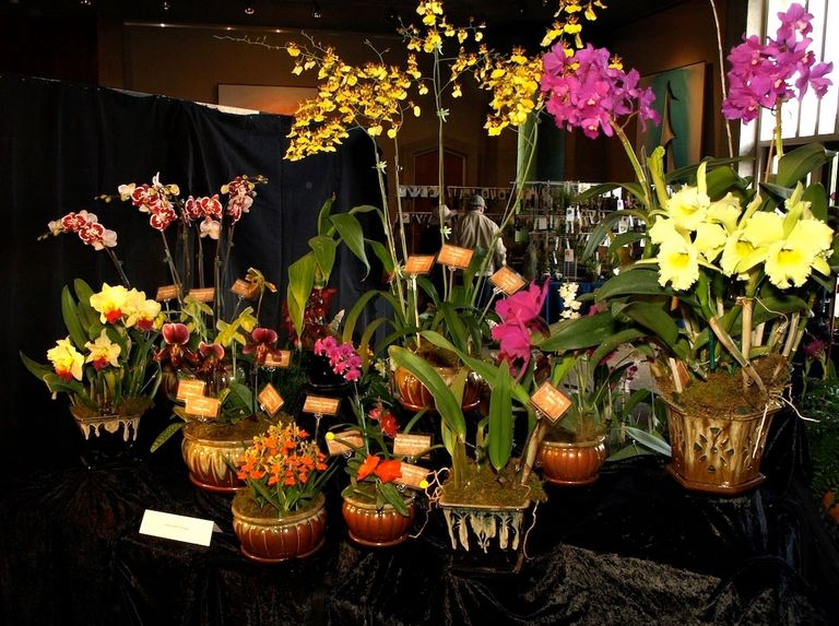 Array of orchids showing various species and hybrids.