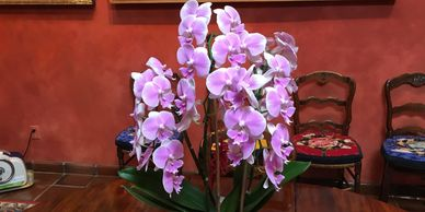 Living Orchids make great gifts because they last in bloom for 2 to 4 months.