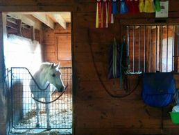 pony looking out of her stall
