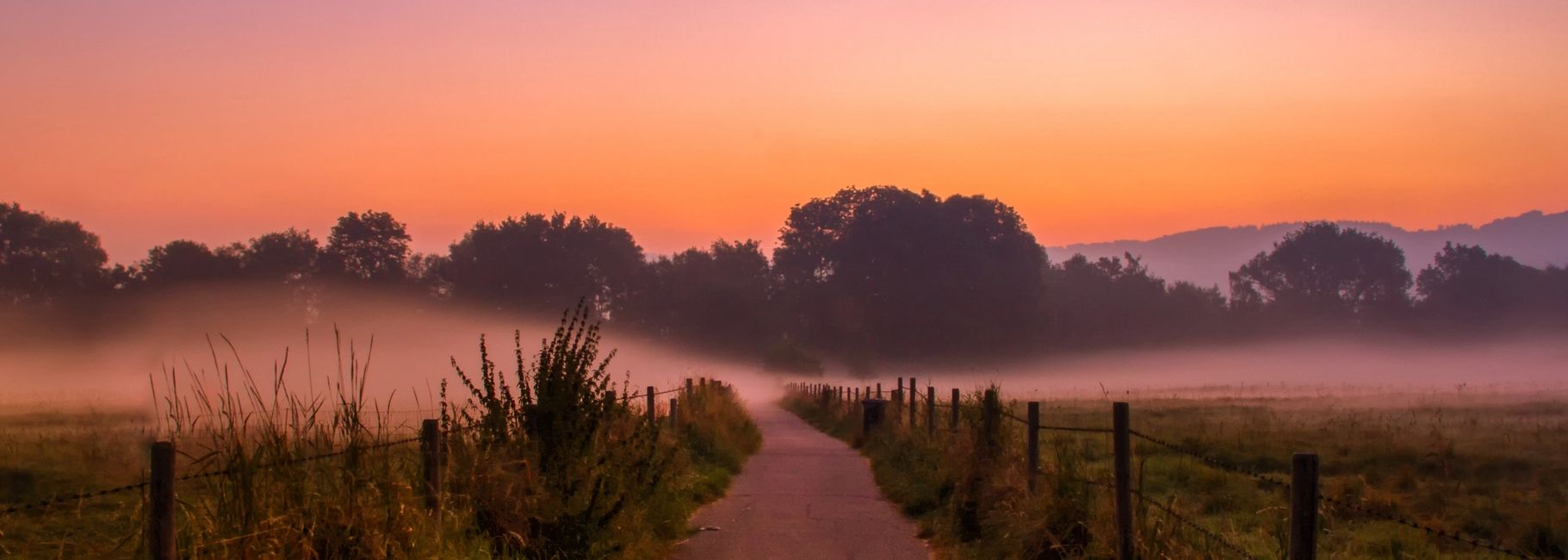 foggy natural landscape of a pathway