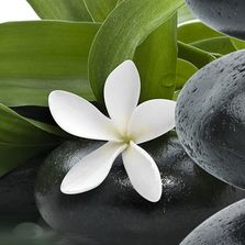 White flower and stones