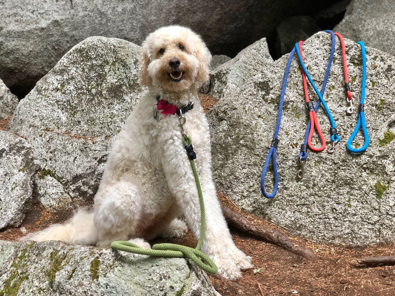 Jinger with upcycled climbing rope leashes