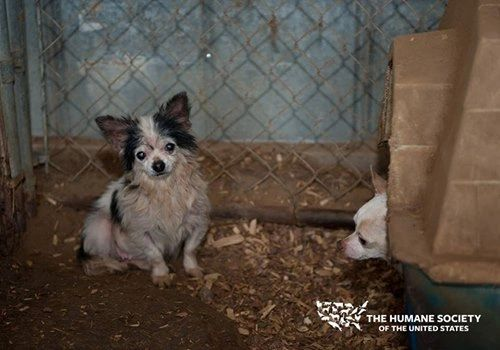 California Pet Stores Can Only Sell Shelter Animals, State Law