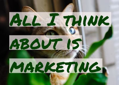 "Picture of a cat with the caption ""All I think about is marketing""."