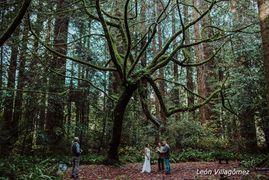 Destination wedding, go-anywhere officiant. Humboldt Redwoods State Park. Elope.