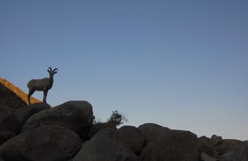 Anza-Borrego State Park. Go-anywhere wedding, officiant. Elope, wed or renew your vows.