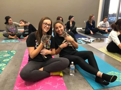 Kitten Yoga In Farmington