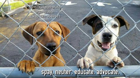 We are a 501c3 nonprofit organization focused on helping low-income dog owners with spay and neuter