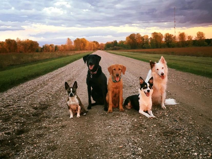 Meet my crew! left to right: Newman, Ping, Rebel, Harper & Dottie.