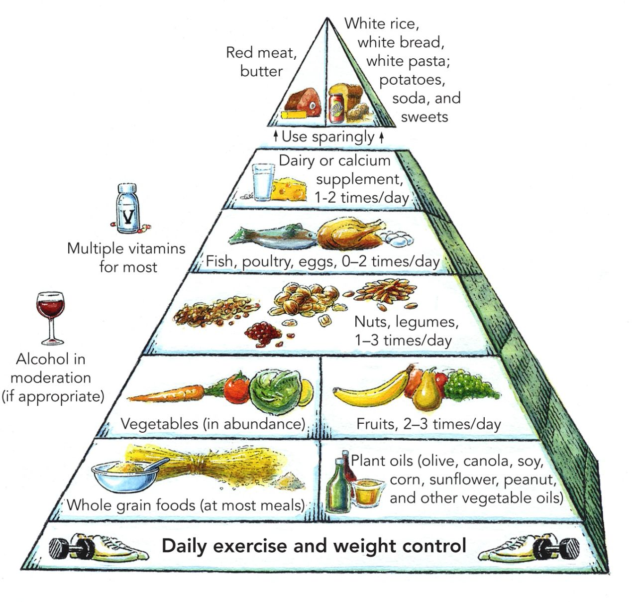 The New Healthy Eating Pyramid