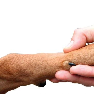 Giving your pet a gentle touch to help them feel at ease during this painful time of their life