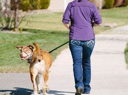 Pet walker , pet sitting, Dog walking,