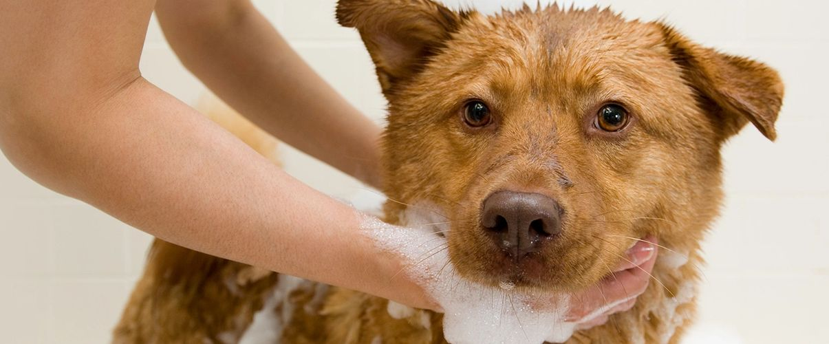 Paws and Pamper,L L C - Pet Grooming, Dog Grooming, Pet Groomer