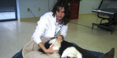 Canine Massage, Paws and Pamper,   Canine sports  Massage Benefits