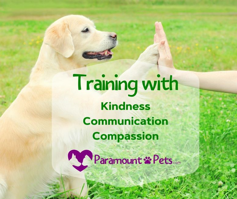 training with cathy pitts paramount pets