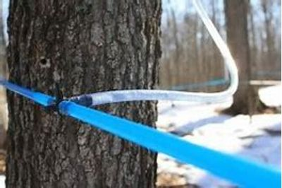 The Wisconsin Maple Syrup Producers Association offers information and resources for small and large producers