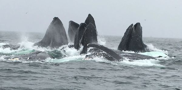 Whale Watching Prince Rupert Fishing Charters- Black Tide Adventures