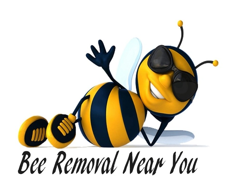 bee removal near you