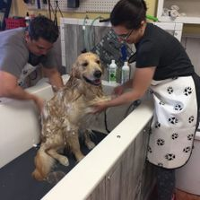 Soapys dog wash dog washing in apopka you wash or let us groom solutioingenieria Images
