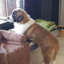 Soapys dog wash dog washing in apopka satisfaction guaranteed solutioingenieria Image collections