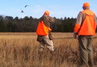 "Guided quail hunts at Little ""q"" Ranch!"