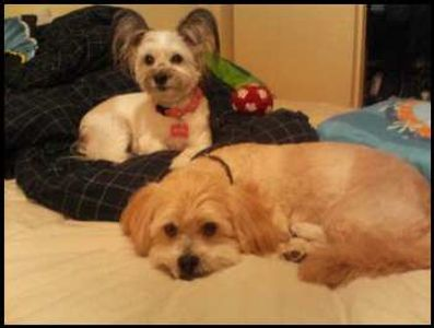 Rescue dogs Ohana and Browny, relaxing at home.